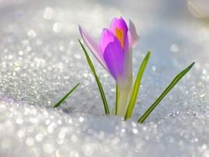 Весна в Риге