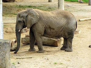 Слон в зоопарке Таллина